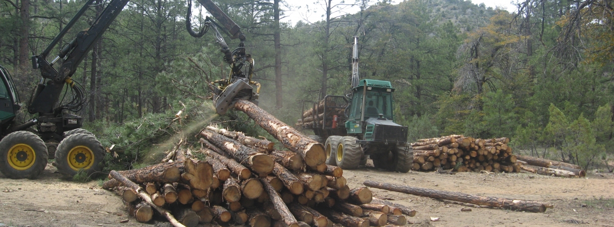 Government Canyon Prescott Logging